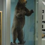 The big bear in the mammals exhibit