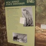 Learn all about the NJ state dinosaur