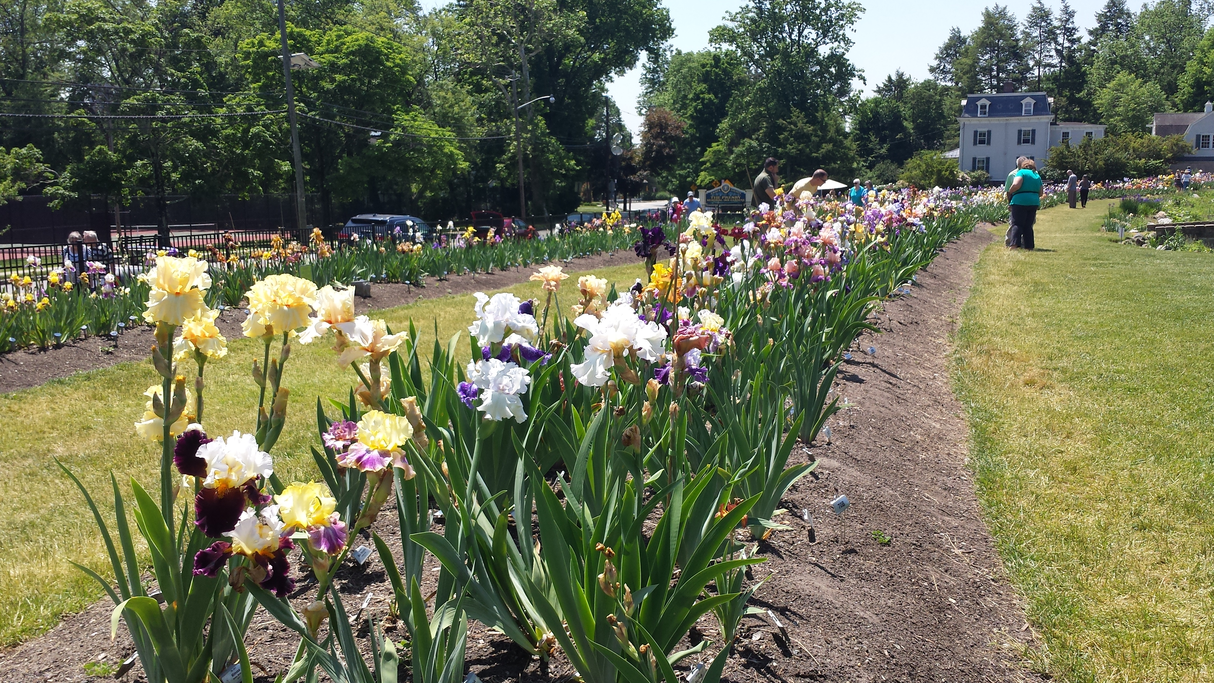 The Presby Memorial Iris Gardens Are Located On 474 Upper Mountain Ave,  Montclair, NJ 07043.