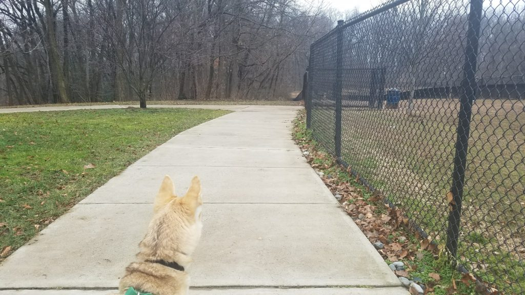 Annalise and the sidewalk on the outside border of dog park